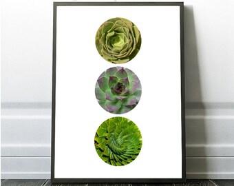 Succulent Print, Succulent Photography, Botanical Photography, Succulent Poster Print, Succulent Art, Succulent Wall Art, Botanical Decor