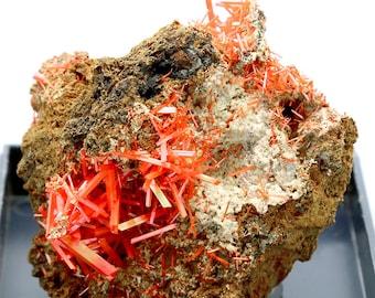 Crocoite Crystal Cluster on Matrix – 80g