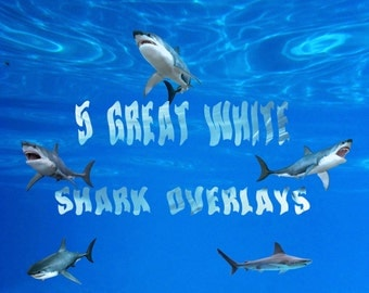 5 x High Res Great White Shark Overlays, Instant Download.