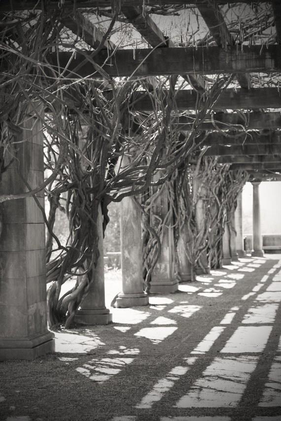 Arbor of Vines
