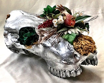 Cow skull, real cow skull with teeth, chrome silver cow skull planter sculpture