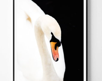 Swan print, Bird Print, Swan Photo, Minimal decor, Bird Wall Art, Minimal art, Minimalist Print, Scandinavian Printable Art, Modern