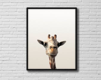 Giraffe poster, giraffe print, printable art, nursery poster, wall hanging, animal art, giraffe photograph, A4, 8 x 10, 11 x 14, DOWNLOAD