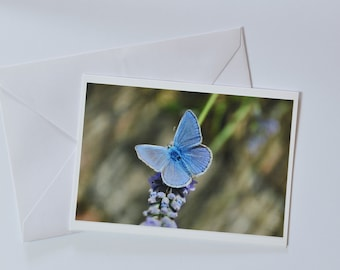 Greeting card: Butterfly