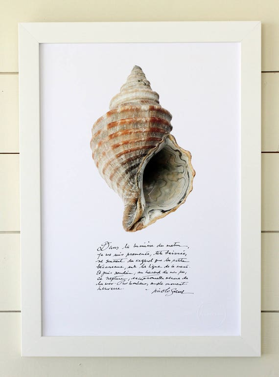 Whelk poster with calligraphied poetry