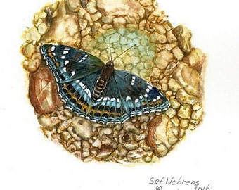 Fine art painting, watercolor, Butterflies, large Kingfisher Butterfly