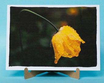 Welsh Poppy design - Bright and bold card - Card for flower fan - Friend birthday card - Anniversary card - Flower card - Eco friendly card