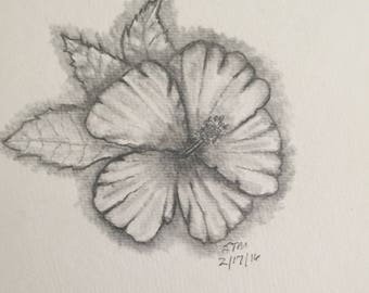 Hibiscus (Charcoal Pencil)