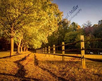 Peaceful Farm during Autumn Sunset // Digital Image
