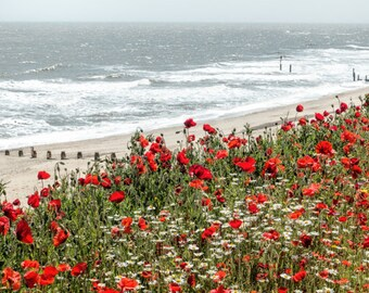 Poppies on Southwold Beach