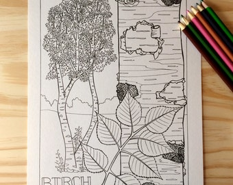 Single Coloring Page - Birch Tree