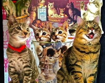 Kitty Clones