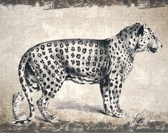 Digital download vintage look leopard