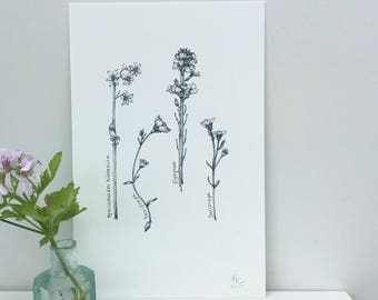 Garden Flowers - Botanical Art Print