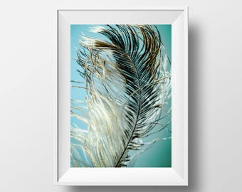 Feather Print, Feather Printable Art, Wall Art Print, Tropical Digital Art, Ostrich Feather, Moden Minimal, Blue Poster, Birds, Best Print