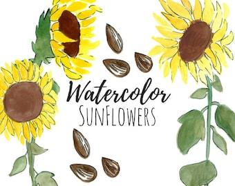 Sunflower clip art - Sunflower art - Watercolor clip art - Flower clip art - Commercial use