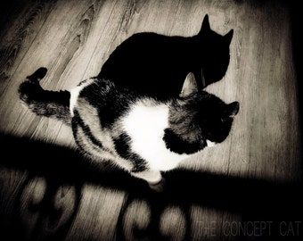 Cat art photography, original fine art print, cat shadow, black and white, photo printing