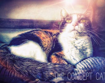 cat art print, fantasy art, magical digital art, cat lover gift, mystic feline art, calico cat, photo print, cat picture