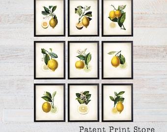 Lemon Botanical Art Prints. Lemon Prints. Flower Wall Art. Botanical Print. Kitchen Art Prints. Dining. Botanical Wall Art. Farmhouse. 222