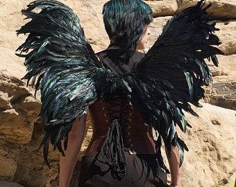 Blackbird Feather Wings