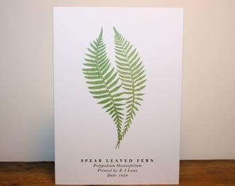 Spear Leaved Fern: Greeting Card
