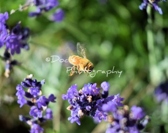 Flight of the Bee; Print photography, nature, blossoms, flowers, bees