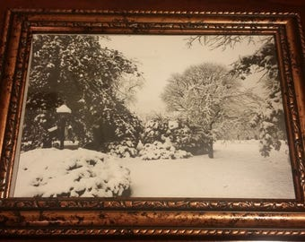 Snowy Vintage Photo, Vintage photography, Framed Photography, 70s, Backyard, Snowy Trees, Trees, Snow