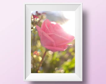 Pink rose print, rose printable, home decor, Art & collectibles, rose photography, pink rose photo