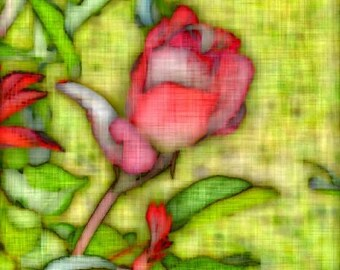 Digitally Enhanced 8x10 Photo Print - Pink Rose Bud