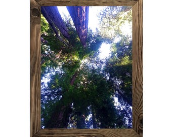 Forest Canopy, Tree Art Print, Home Wall Decor, Nature Lover Print, Outdoor Instant Download