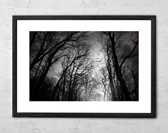 Born Of Osiris - Fine Art Photography - Black and White Prints - Dark Art - Horror Art - Horror Photography - Gothic Wall Art - Gothic Decor