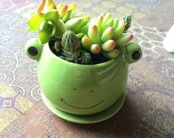 froggy succulent
