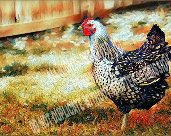 Silver Laced Hen Print, Backyard Chicken, Rustic Home Decor, Gift for a Chicken Lover