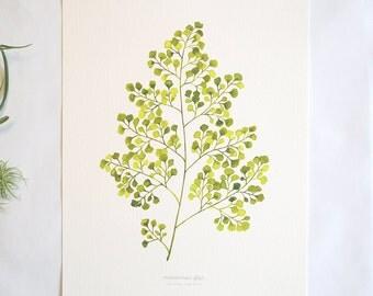 Maidenhair Fern Print - Watercolor Fern, 11x14