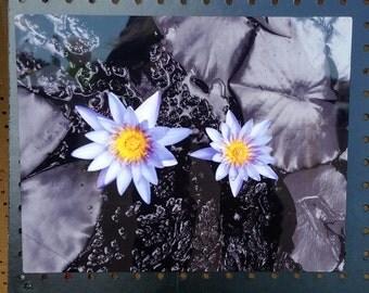 Double purple lotus