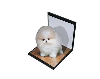 Pomeranian 3D Photo