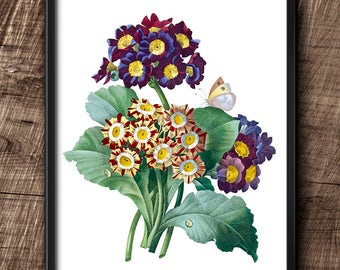 Primulas · 8x10 · Instant Download · Botanical · Vintage · Wall · Printable · Digital File #42