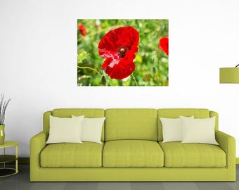 The spring, poppy, flower, nature, painting, home, colors, photrography, photo, art, phorographica prints