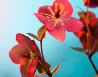 tiny flowers. #1