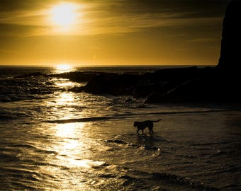 Dog Silhouette Greeting Card