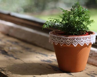 Small Terracotta Pots - Lace Detail