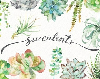 Watercolor succulent set (botanical, green, clipart, air plant, flower, vintage, wedding, card, logo, terrarium, print, floral, cactus, art)