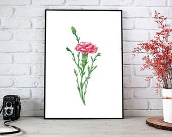 Carnation Flower Watercolor Illustration Print