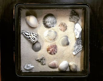 Beach Decor - Seashell Display Table