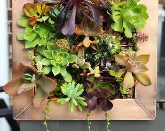 Living Succulent Frame, Vertical Garden, Succulent Vertical Garden, Succulent Arrangement (Pick-up Only)
