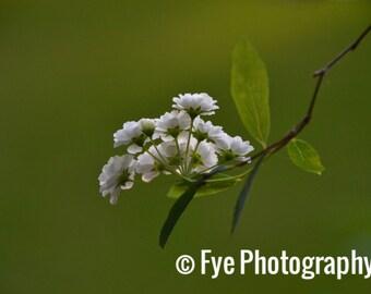 White Macro Flower Print