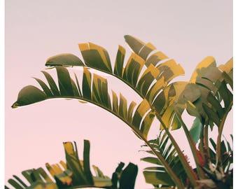 Nature Photography  - Green Art - Pink Breeze - Fine Art Print - Green Leaf Print - Banana Leaf - Botanical Art - Oversize Art - Tropical