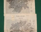 Vintage Petit Point & Needlepoint Patterns, Book, Thread