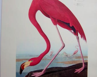 VINTAGE 14 X 17 AUDUBON American Greater Flamingo lithograph print VG condition