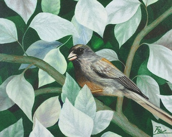 Among the Leaves - Fine Art Print - 13x9